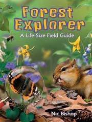 Forest Explorer: A Life-Size Field Guide